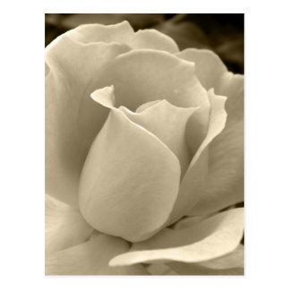 Sepia Rose Postcard