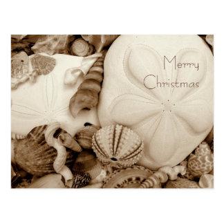 Sepia Sand Dollar Christmas Postcard