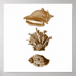 Sepia SeaLife Group12A Print #8 Seashells