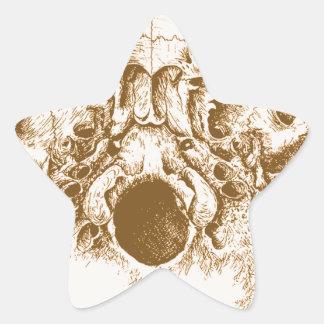 Sepia Skull from Below Star Sticker