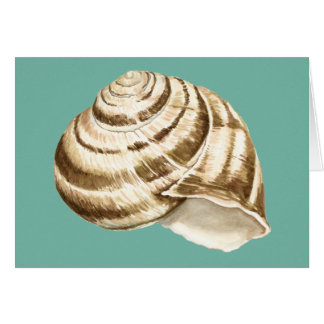 Sepia Striped Shell on Teal Card