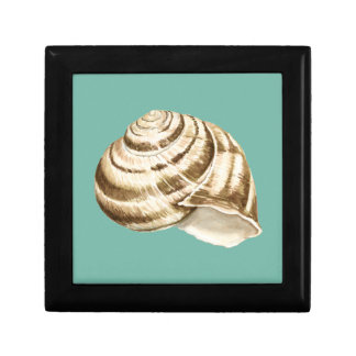 Sepia Striped Shell on Teal Keepsake Box