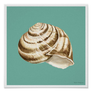 Sepia Striped Shell on Teal Poster