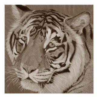 sepia tiger big cat original wildlife realist art poster