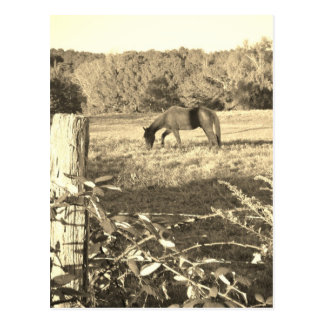 Sepia tone Brown horse and fence Postcard