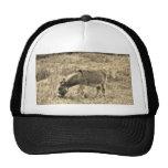 Sepia Tone Donkey  in a Field. Mesh Hats