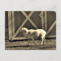 Sepia Tone  Goat and Barn Doors Postcard