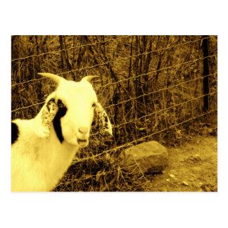 Sepia tone Goat Postcard