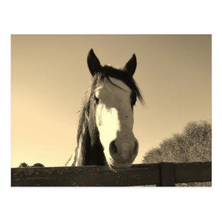 Sepia Tone Horse Postcard