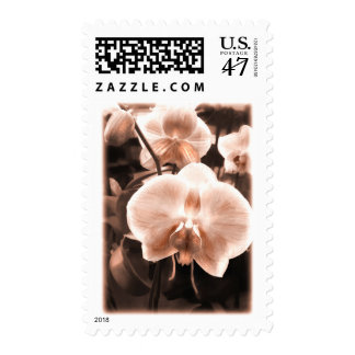 Sepia Tone Phalaenopsis Orchid Postage