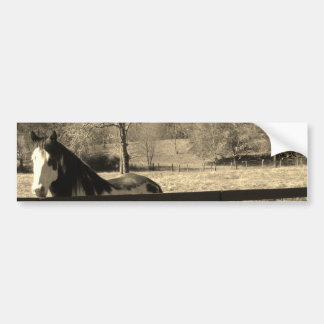Sepia Tone  Photo of  black and white Horse Bumper Sticker