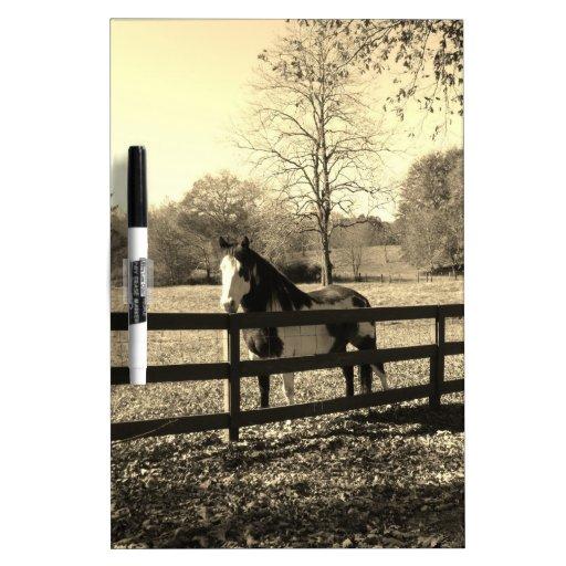 Sepia Tone  Photo of  black and white Horse Dry-Erase Board