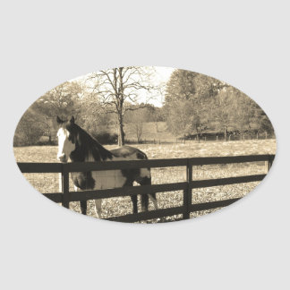 Sepia Tone  Photo of  black and white Horse Oval Sticker