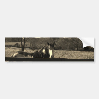 Sepia Tone  Photo of  brown  and white Horse Bumper Sticker