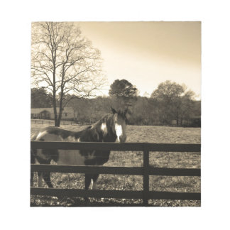 Sepia Tone  Photo of  brown  and white Horse Memo Note Pads