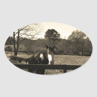 Sepia Tone  Photo of  brown  and white Horse Oval Sticker