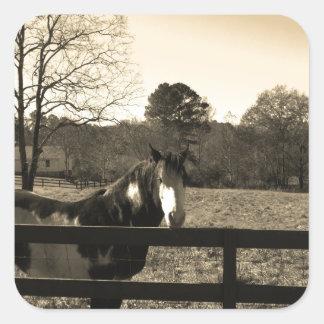 Sepia Tone  Photo of  brown  and white Horse Square Sticker