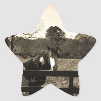 Sepia Tone  Photo of  brown  and white Horse Star Sticker