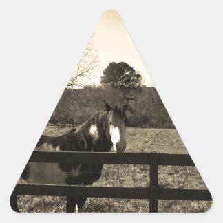 Sepia Tone  Photo of  brown  and white Horse Triangle Sticker