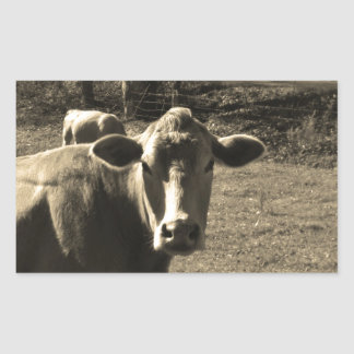 Sepia Tone  Photo of  Brown Cow Rectangular Sticker