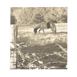 Sepia Tone  Photo of  brown Horse Memo Notepads