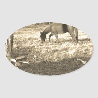 Sepia Tone  Photo of  brown Horse Oval Sticker