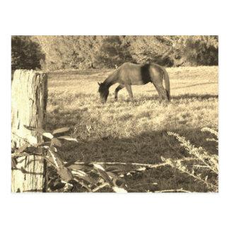 Sepia Tone  Photo of  brown Horse Postcard