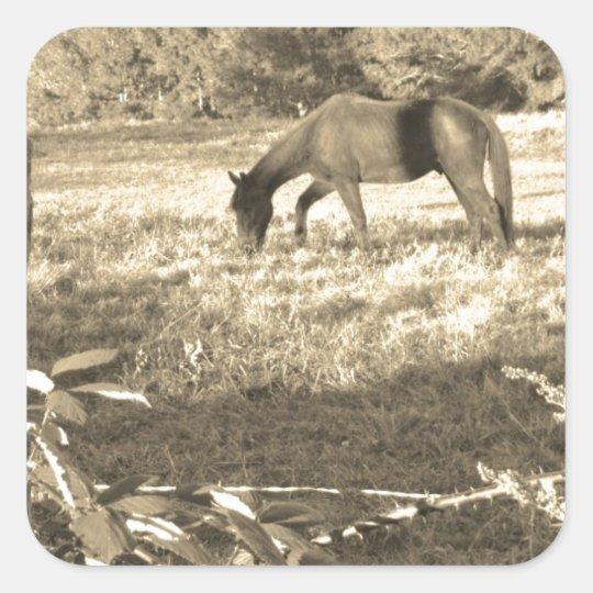 Sepia Tone  Photo of  brown Horse Square Sticker