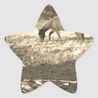 Sepia Tone  Photo of  brown Horse Star Sticker