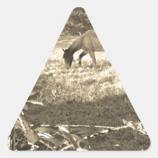 Sepia Tone  Photo of  brown Horse Triangle Sticker