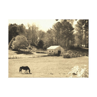 Sepia Tone  Photo of  brown Horse with Barn Canvas Print