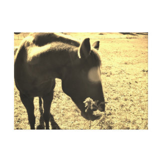 Sepia Tone  Photo of  brown Horse with flowers Canvas Print