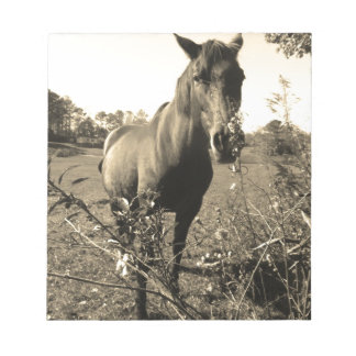 Sepia Tone  Photo of  brown Horse with flowers Memo Note Pads