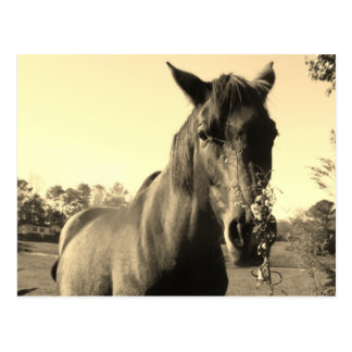 Sepia Tone  Photo of  brown Horse with flowers Postcard