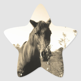 Sepia Tone  Photo of  brown Horse with flowers Star Sticker