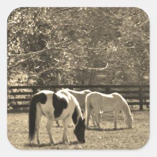 Sepia Tone  Photo of Horse Square Sticker