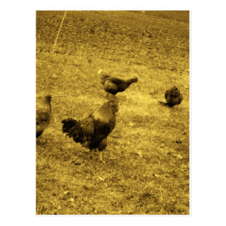 Sepia Tone Rooster in the Yard Postcard