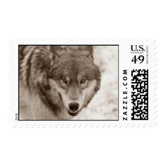 Sepia Tone Wolf Postage