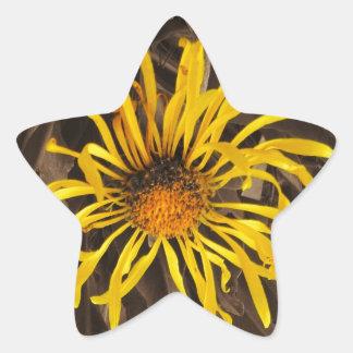 Sepia tone Yellow wildflowers Star Sticker