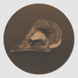 Sepia Toned Finch Skull by KLM Classic Round Sticker