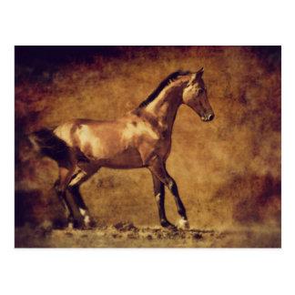 Sepia Toned Rustic Horse Art Postcard