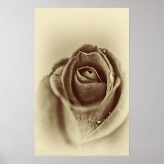 sepia vintage rose poster