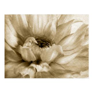 Sepia White & Cream Dahlia Background Customized Postcard