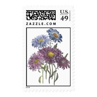 September Birthday Flower Aster Postage