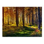 September Forest Postcard