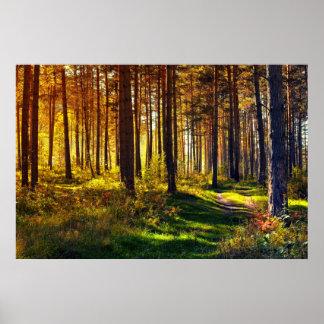 September Forest Poster