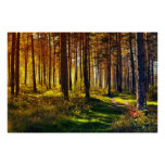 September Forest Posters