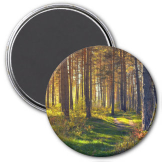 September in the forest.Sunrise in autumn forest Magnet