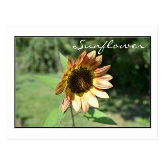 September Sunflower Post Card