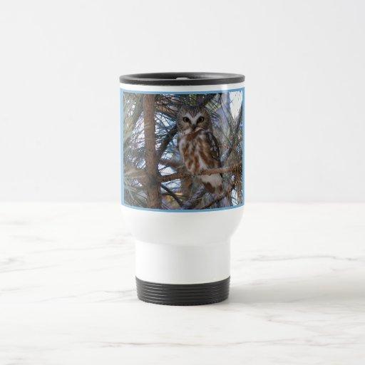 Septentrional Sierra-Amole el búho en árbol de pin Tazas De Café